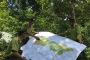 Hiệu quả công tác quản lý, bảo vệ rừng ở Sơn La