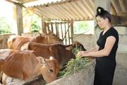 Sơn La đẩy mạnh hoạt động tư vấn, hỗ trợ cho nông dân