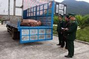 Quảng Ninh: Bắt giữ 1,8 tấn lợn thịt chuẩn bị vượt biên