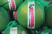 Cô Gái Bưởi Hồng và thanh long Thanh Bình lên kệ siêu thị ở Canada