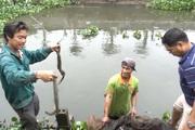 Hưng Yên: Trồng hồng cổ Sa Pa, nuôi con đặc sản dưới ao, lão nông thu nhập tiền tỷ