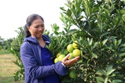 Hòa Bình: Sẵn sàng cho mùa lễ hội cam Cao Phong