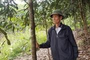 Thí điểm mô hình liên kết tiêu thụ sản phẩm và cung ứng vật tư nông nghiệp tại xứ Lạng