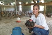 Nam Định: Cho chim trĩ ăn chuối, uống nước tỏi mà đẻ sòn sòn, nông dân 8X bỏ túi hàng trăm triệu mỗi năm