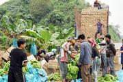 Loay hoay xử lý rác thải nhựa từ nông nghiệp