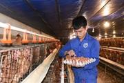 """Cấn Hữu (Quốc Oai, Hà Nội): """"Đòn bẩy"""" kinh tế từ chăn nuôi"""