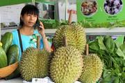 """Những loại quả nào đang được """"ưu ái"""" thúc đẩy xuất khẩu chính ngạch vào Trung Quốc?"""