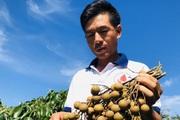 Thị trường Trung Quốc: Đã hết thời dễ tính!