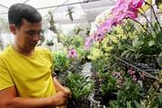 Bí quyết bỏ túi chọn mua và chăm sóc chậu phong lan bền, đẹp