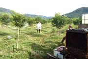 """Một nông dân tỉnh Bình Định sáng chế ra xe phun thuốc sâu rất là ngầu, """"nhoáng cái"""" đã chạy xong 10ha vườn"""
