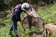 """Vụ cưa hạ hàng trăm cây thông """"khủng"""": 6 điểm phá rừng với hơn 140m3 gỗ"""