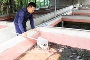 Nam Định: Bỏ phố về quê nuôi lươn không bùn dày đặc trong bể xi măng, cứ bán 1 bể lươn lời 40 triệu