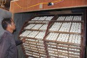 Chỉ nuôi vịt đẻ, 1 ngày nhặt 9.000 quả trứng mà một ông nông dân tỉnh Nam Định là tỷ phú