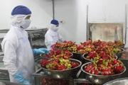Việt Nam phải làm gì để vượt Trung Quốc, Chile lọt tốp 5 nước xuất khẩu rau quả hàng đầu thế giới?