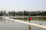 Quảng Ninh: Nông dân khá giả nhờ vay vốn ưu đãi đầu tư nuôi thủy sản