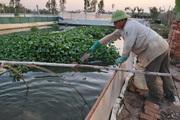 Hà Nội: Bằng cách này, lão nông U50 nuôi ba ba gai cùng cá chuối hoa con nào cũng to bự, bán đắt tiền