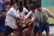 """Sau nhiều vụ cá sấu sổng chuồng, Chủ tịch UBND tỉnh Cà Mau chỉ đạo """"nóng"""" điều gì?"""
