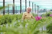 TP.HCM thiếu nguồn giống hoa lan nghiêm trọng