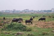 Quảng Ninh: Người ngoại tỉnh mua đất nông nghiệp bỏ hoang sẽ bị thu hồi?