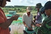 Ông nông dân tỉnh Phú Yên nuôi 40 vạn con ốc gì mà vớt 1 rổ lên khách đến xem trầm trồ thán phục?