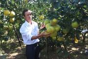 """Hà Nội: """"Rót vốn"""" cho mô hình trồng cây ăn quả, chăn nuôi, nông dân khá giả lên"""