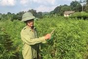 Hà Giang: Nông dân nơi này khá giả nhờ trồng đào bán Tết, trồng cam theo tiêu chuẩn VietGAP