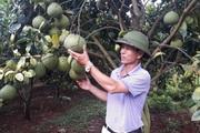 Liều phá vải trồng bưởi, ông nông dân Lục Ngạn thắng lớn, lãi 2 tỷ đồng/năm
