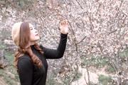 Sơn La: Hoa mận khoe sắc tinh khôi, hút hồn du khách