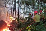 Năm 2020, thiệt hại do cháy rừng giảm 68%