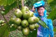 Báo nước ngoài nói gì về cà phê Robusta Việt Nam?