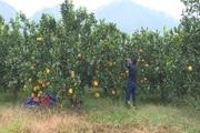 Chàng trai dân tộc Dao: Tuổi 22 làm giàu trên đất khó