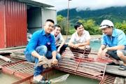 Hà Giang: Cất bằng tài chính, trai 9X về quê nuôi cá đặc sản dưới sông, trên bờ nuôi gà đi bộ bán đắt hàng