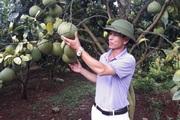 Bắc Giang: Cãi cả họ, chặt thứ cây ra quả nhỏ trồng thứ cây ra quả to, ông nông dân Lục Ngạn lãi 2 tỷ