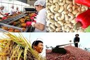 Giá nông sản hôm nay (5/12): Lúa gạo tăng, cà phê, thịt lợn giảm nhẹ