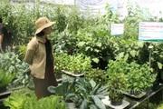 TP.HCM: Phát triển giống cây trồng gắn với nền nông nghiệp công nghệ cao