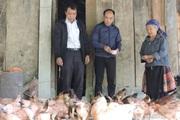 Chưa bao giờ có nhiều gà như vậy, hộ nghèo ở Pá Lau không còn lo giáp hạt nữa