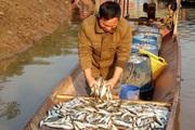 Về Quỳnh Nhai thưởng thức đặc sản cá tép dầu