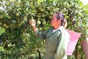 Nguồn quỹ tiếp sức cho nông dân làm giàu