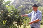 """Ôm đống nghề, mỗi năm lão nông Sơn La """"đút túi"""" 200 triệu đồng"""