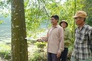 Chuyển hóa rừng gỗ lớn, nông dân Nghệ An thu lợi gấp 360 triệu đồng/ha