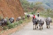 Hội Nông dân Quỳnh Nhai: Giúp nông dân xây dựng nhiều mô hình kinh tế hiệu quả
