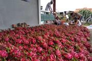 """Giữa """"tâm dịch"""" Corona: Chờ cơ hội cho trồng trọt, chăn nuôi"""