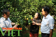 Hoà Bình: Phát triển nông nghiệp thông minh và sản xuất an toàn theo chuỗi