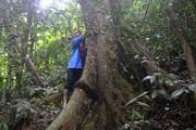 Kỳ bí khu rừng thiêng 300ha lâm tặc không dám chặt 1 cây