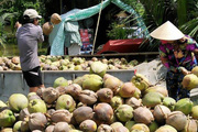 JICA hỗ trợ tỉnh Bến Tre giải bài toán thiếu nguồn nước ngọt
