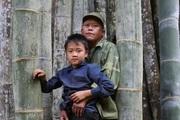 """Đi tìm loài tre khổng lồ ví như """"báu vật"""" trên đỉnh núi thiêng Sơn La"""