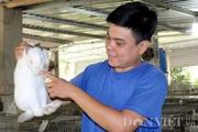 Bỏ heo nuôi thỏ sạch, trai Củ Chi lãi 40 triệu/tháng, tối ngủ ngon