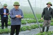 Lạng Sơn: Quan tâm đầu tư phát triển các mô hình HTX nông nghiệp, chăn nuôi