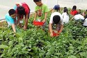 Đồng Nai: Làm vườn đón khách thành phố, lợi nhuận tăng gấp đôi
