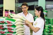 Người Hà Nội ăn hết bao nhiêu gạo mỗi năm?